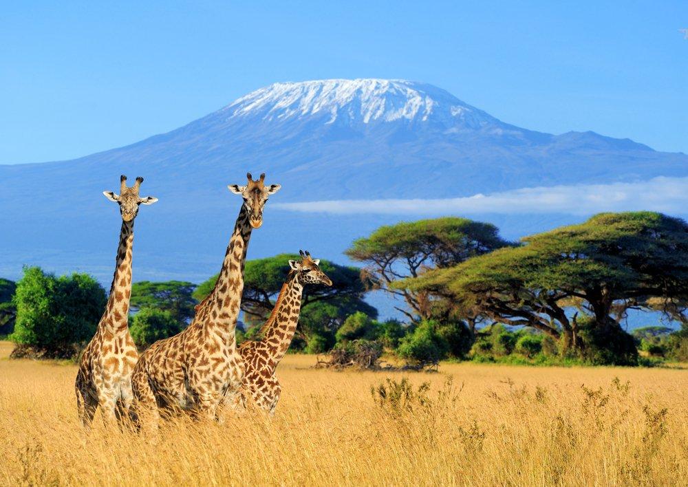 Mount Kilimanjaro National Park view from Kenya