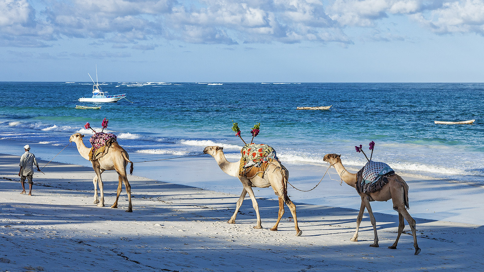 camels-on-the-beach