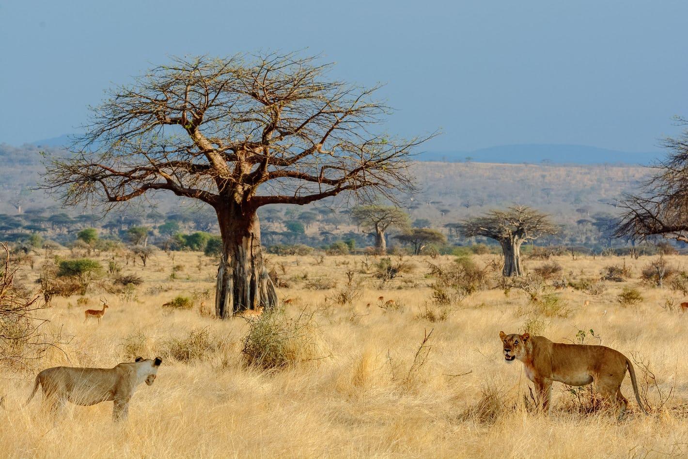 ruaha-tanzania