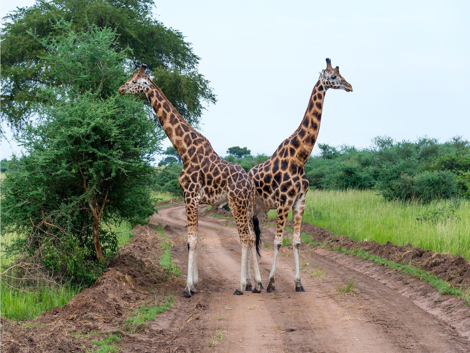 Explore-Karuma-wildlife-reserve