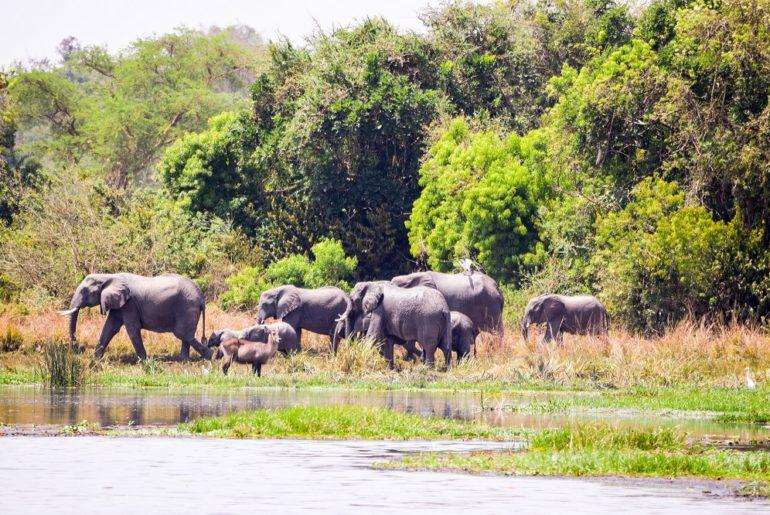 Karuma-Wildlife-Reserve