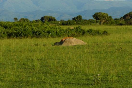 Kyambura-Wildlife-Reserve (1)