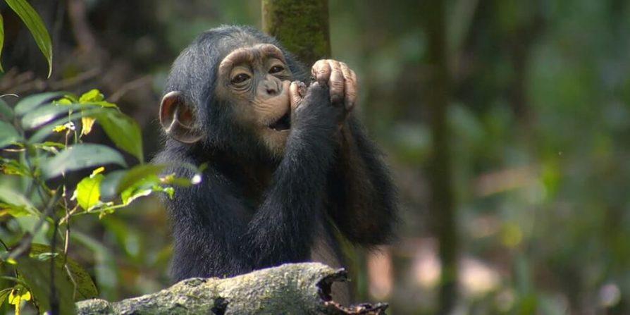 Kyambura-Wildlife-Reserve