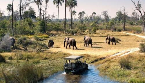 elephants at Pian-upe