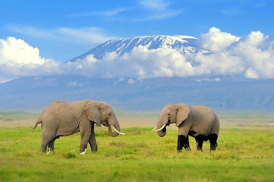 elephants-at-amboseli