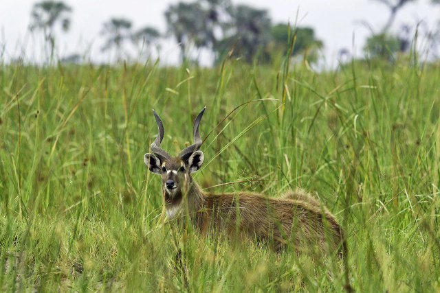 katong-wildlife-reserve