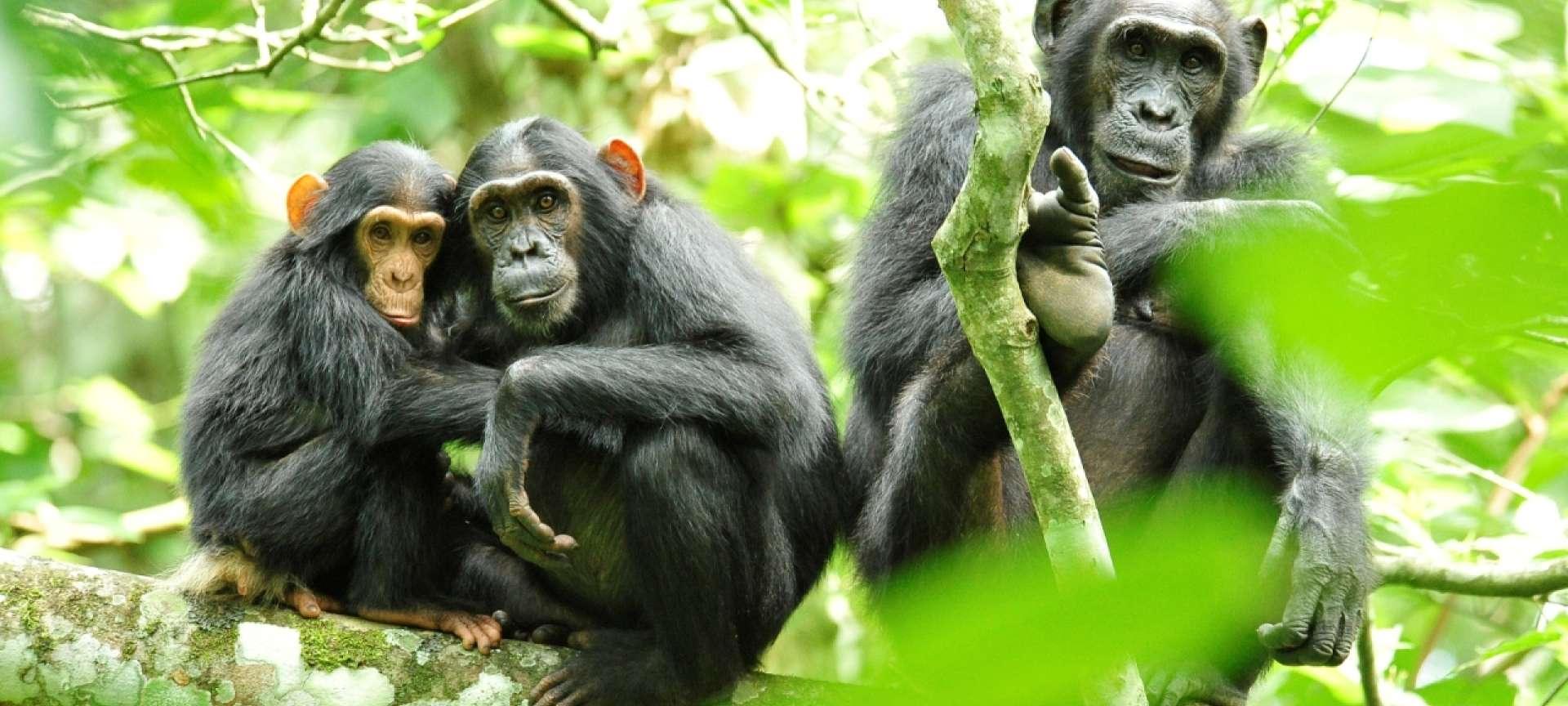 kibale-gorillas__1920x864