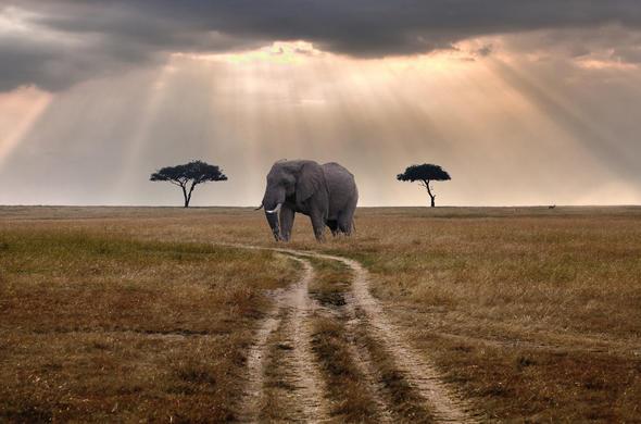 marsabit-lodge-elephant