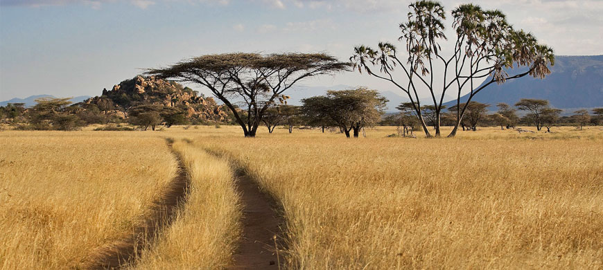 shaba grassland