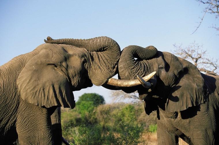 two_elephants